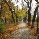 """Urmând modelul """"Kaizen"""" Parcul Municipal din Aiud va fi curățat de către voluntari, pensionari și deţinuţi"""