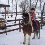 Terapie cu ajutorul cailor la Rădești pentru copii cu dizabilităţi
