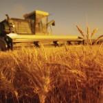 Fermierii din Aiud sunt dezamăgiţi de Guvern