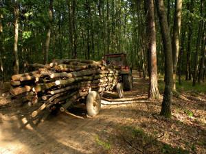 transport-lemne-tractor