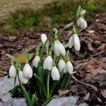 Mesaje de 1 martie 2014. Ce sms-uri, felicitări şi mesaje puteţi trimite cu ocazia venirii primăverii? | aiudinfo.ro