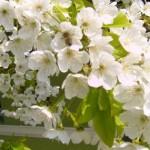 Mesaje de Florii 2014. SMS-uri, felicitări și urări de Sărbătoarea Floriilor | aiudinfo.ro