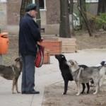 Un an nou şi o poveste veche: câinii maidanezi dau de lucru aiudenilor