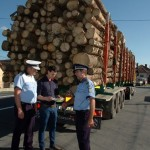 Șofer din Alba depistat la Turda transportând 6 mc de material lemnos fără aviz de însoţire