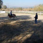 Aproape 250 de copii cu dizabilități s-au întrecut în probe de călărie la Leorinț