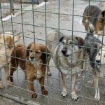 Primăria Aiud va investi peste o jumătate de milion de lei pentru construirea unor adăposturi pentru câinii vagabonzi