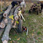 Două persoane surprinse în flagrant de polițiști, în timp ce sustrăgeau material lemnos aparținând unei societăţi comerciale din Aiud