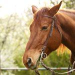 Dosare penale pentru doi bărbați din județul Cluj după ce au furat calul unui cetățean din Rimetea