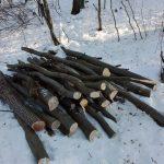 Bărbat de 55 de ani din Lopadea nouă cercetat de polițiști pentru tăiere fără drept şi furt de arbori