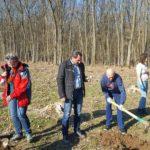 """Angajaţii din Primăria municipiului Aiud au plantat 1500 de puieţi de arbori, în cadrul """"lunii plantării arborilor"""""""